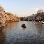 井の頭公園でボートを楽しむ