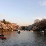 井の頭公園のボート池