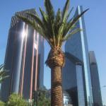 メキシコシティの木とビルと青空