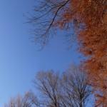 紅葉と青空