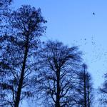 井の頭公園の渡り鳥