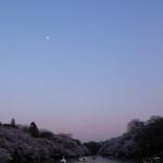 サクラと月と井の頭