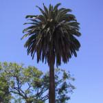 LAっぽい木と青空