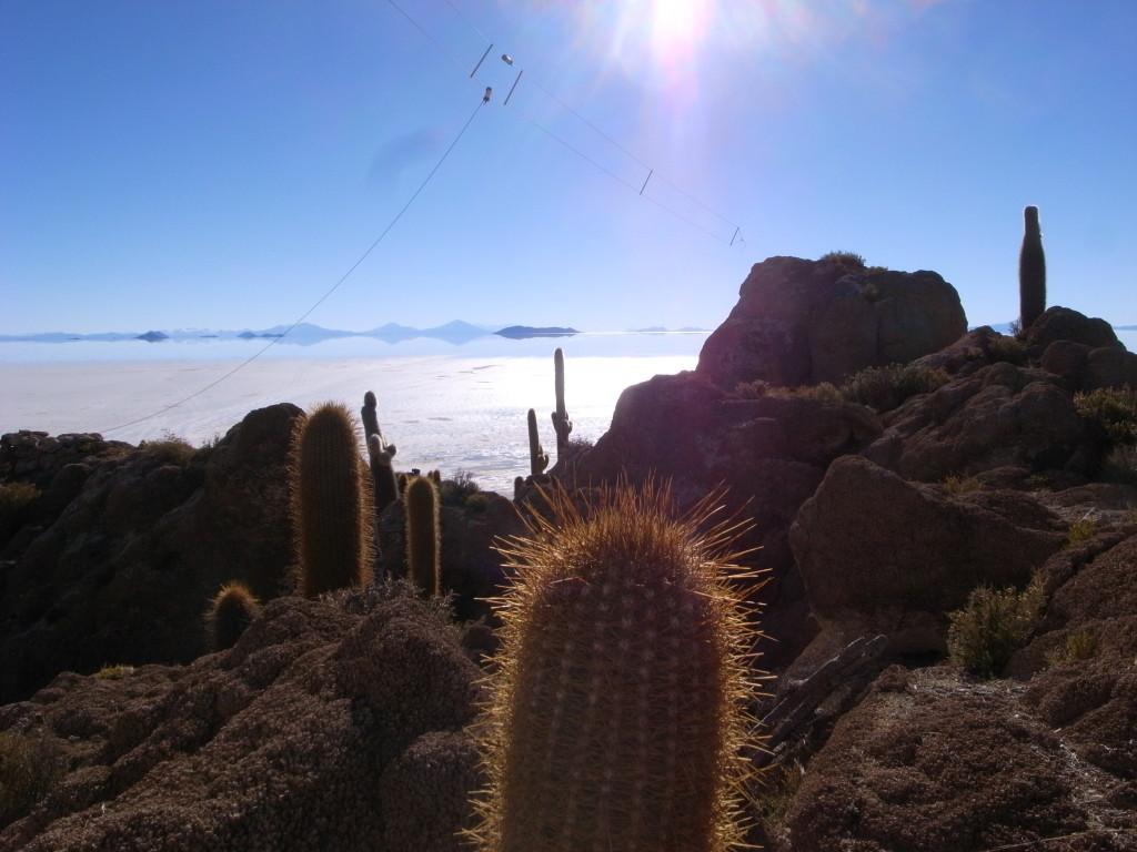 ボリビアのウユニサボテン公園