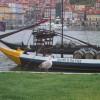 ポルトガルの舟と鳥