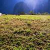 マチュピチュの芝